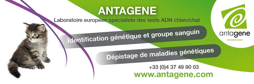 antagène, identification génétique
